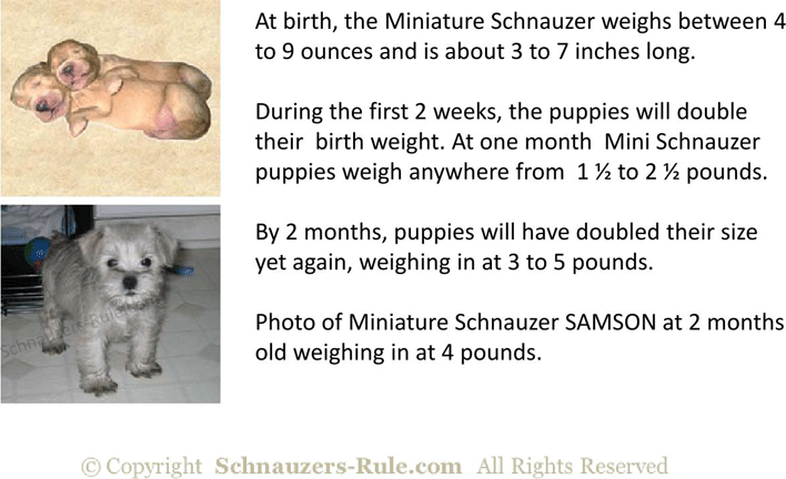 Free Miniature Schnauzer Puppy Growth Rate Chart Pdf 402kb 7